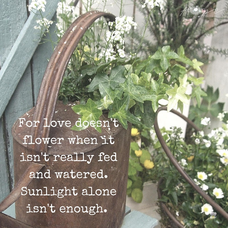 For love doesn't flower when it isn't really fed and watered. Sunlight alone isn't enough.